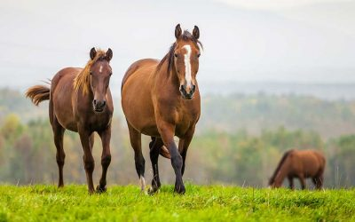 New Equine Welfare Data Collective Launching Project to Understand the Metrics of Horses in Transition