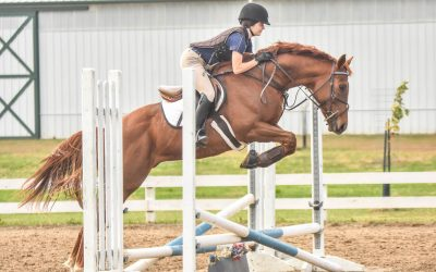 50th Horse Rehomed in Retrained and Remarkable Challenge