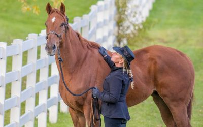 The Right Horse Initiative Awards Grant to Horses Without Humans