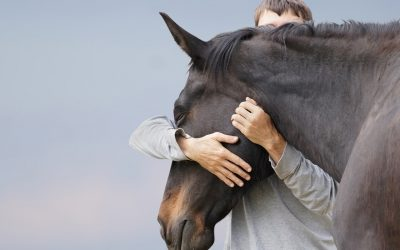 The Right Horse Initiative offers three $10,000 grants for training
