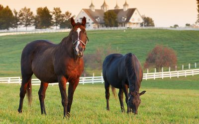 The Right Horse Initiative awards $100,000 grant to rehome Louisiana Thoroughbreds