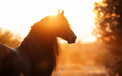 The Right Horse Initiative Awards $275,000 to increase adoptions in Appalachia