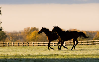 Equine Welfare Data Collective Releases Inaugural Report