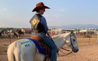 20 Horses Adopted from The Right Horse Training Grant