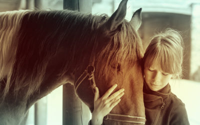The Myth of the Unadoptable Horse