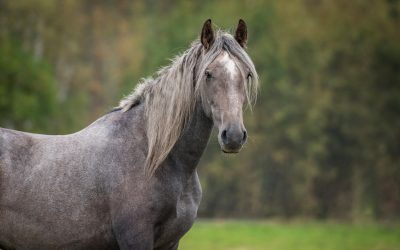 The ASPCA Celebrates First-Ever Adopt a Horse Month this May